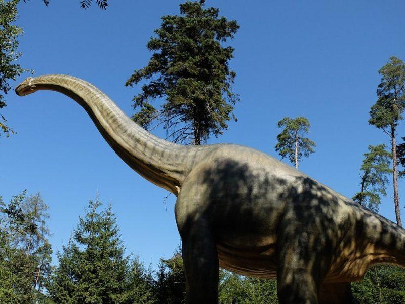 Brachiosaurus grafika