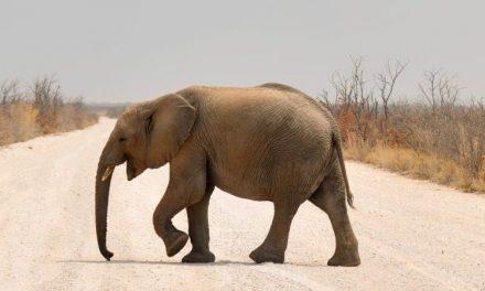 10 największych zwierząt lądowych