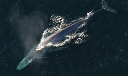 10 największych zwierząt wodnych