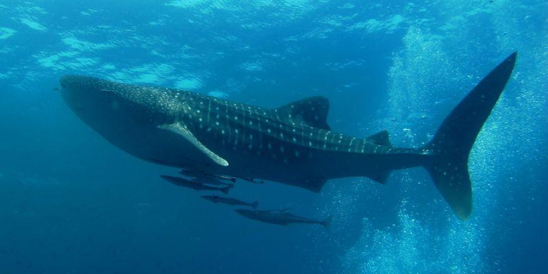 10 największych ryb